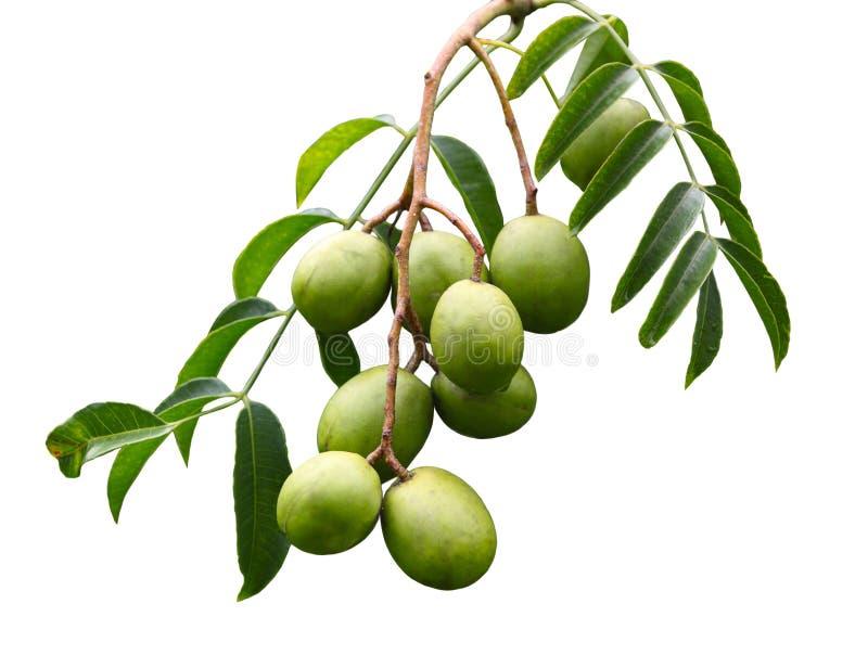 Frutta di spondias dulcis fotografia stock libera da diritti