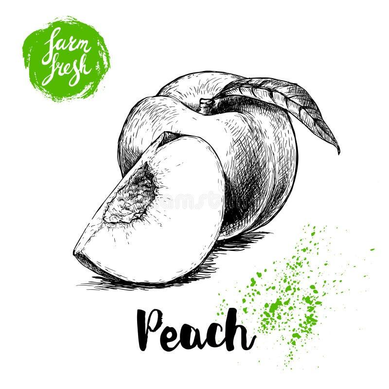 Frutta disegnata a mano della pesca di stile di schizzo Interi pesca e quarto maturi della pesca l'azienda agricola fresca frutti royalty illustrazione gratis