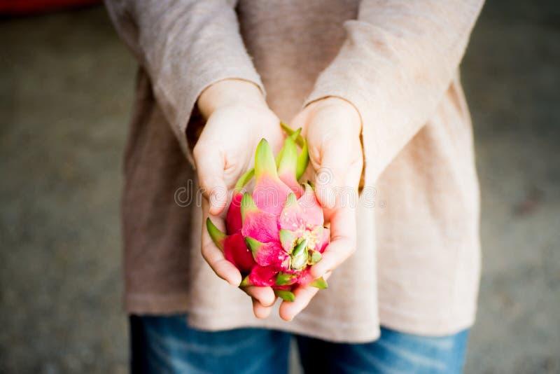 Frutta disponibila del drago di pitaya fresco, pitahaya fotografie stock libere da diritti