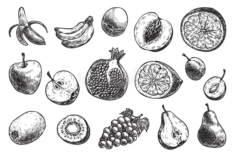 frutta diversa: banana, mela, pera, prugne, ? illustrazione vettoriale