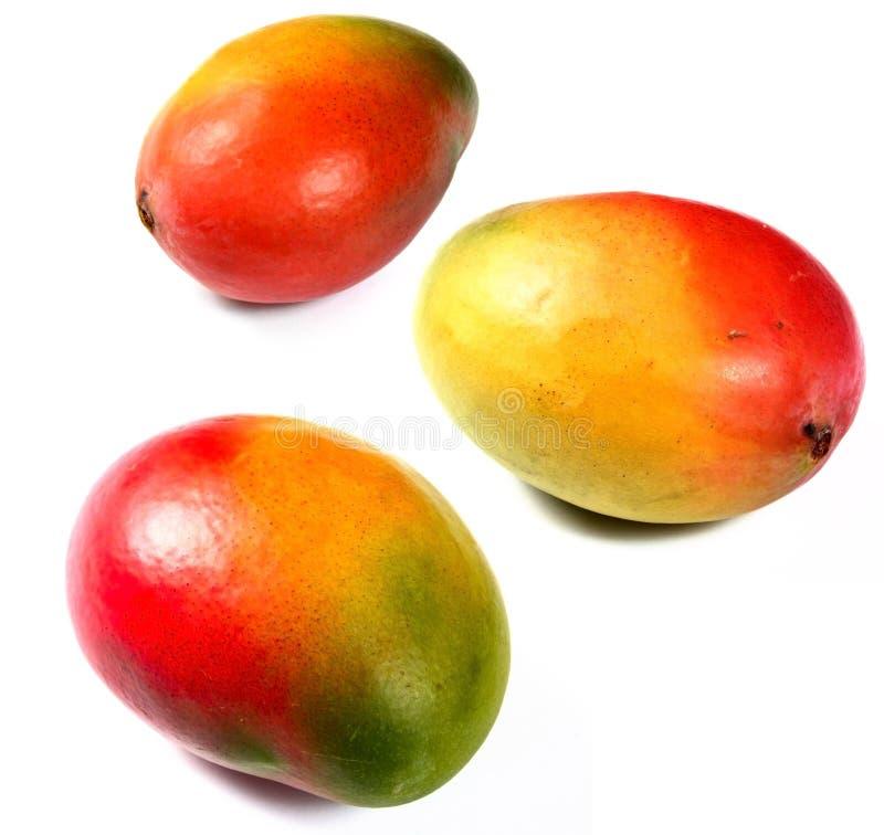 Frutta fresca del mango fotografia stock libera da diritti