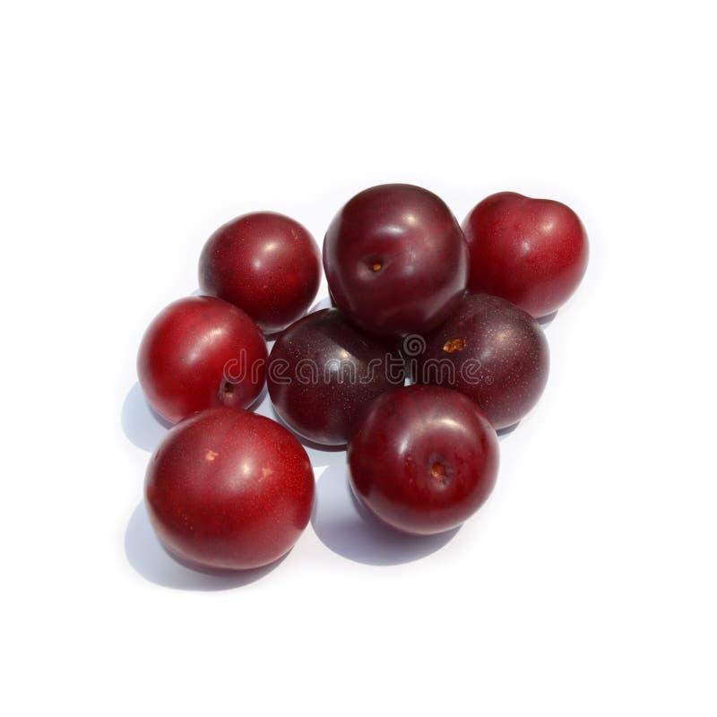 Frutta fresca - prugne rosso scuro isolate su bianco fotografia stock libera da diritti