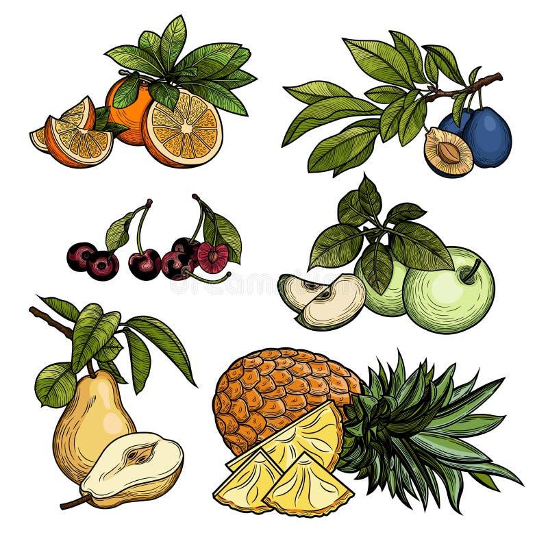 Frutta Illustrazione di vettore royalty illustrazione gratis