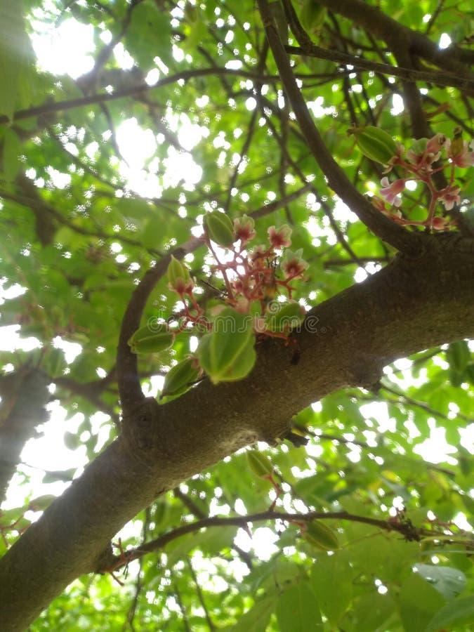 Frutta latente con il fiore fotografie stock libere da diritti