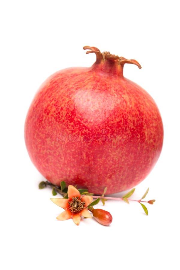 Frutta matura del melograno isolata fotografia stock libera da diritti