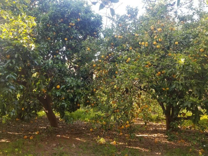 Frutta nella foresta immagini stock