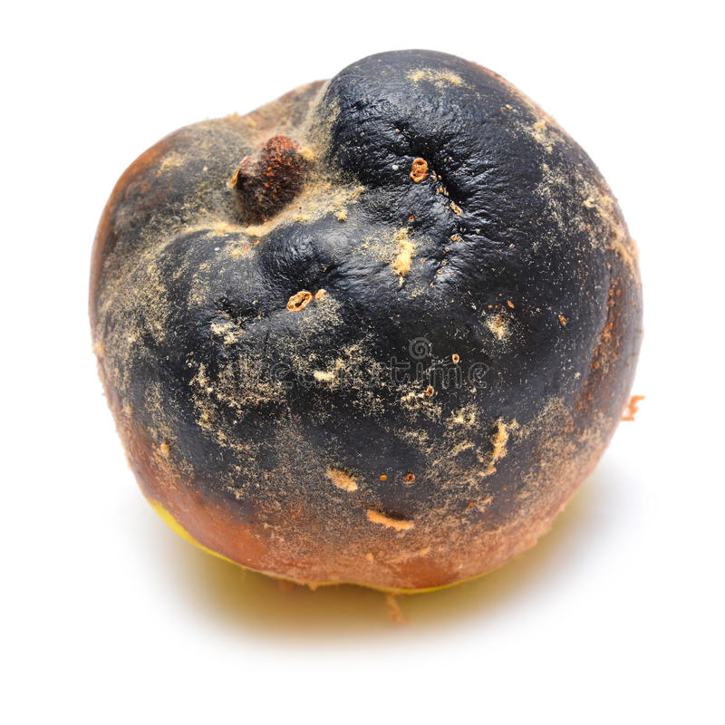 Frutta putrida fotografia stock