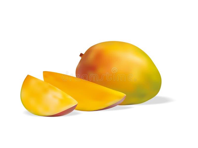 Frutta realistica del mango della frutta fotografia stock