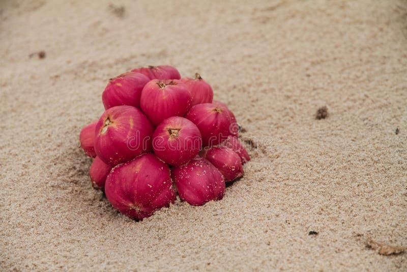 Frutta rossa che si trova sulla spiaggia fotografia stock