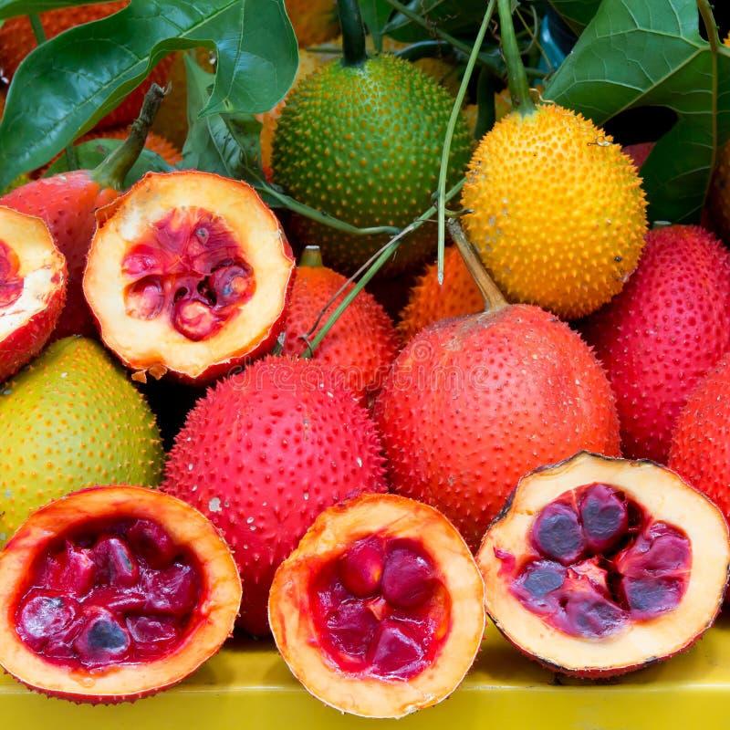 Frutta sana della frutta di Gac immagine stock libera da diritti