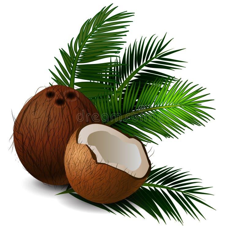 Frutta tropicale del dado della noce di cocco illustrazione vettoriale