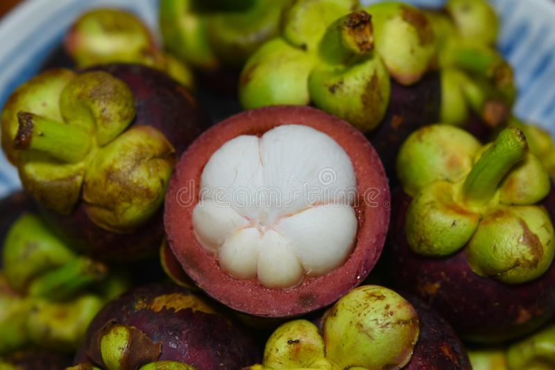 Frutta tropicale del mangostano di garcinia mangostana immagine stock