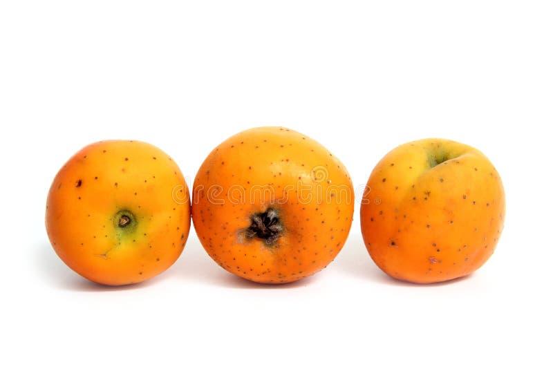 Frutta tropicale di inverno di Tecojote isolata fotografie stock