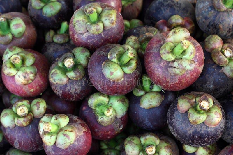 Frutta tropicale - mangostano fotografia stock libera da diritti