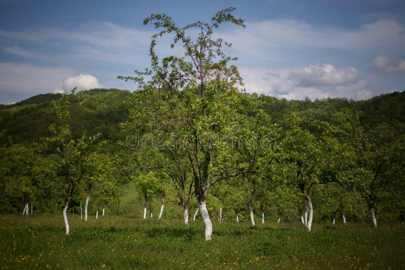 Frutteto in Romania immagine stock
