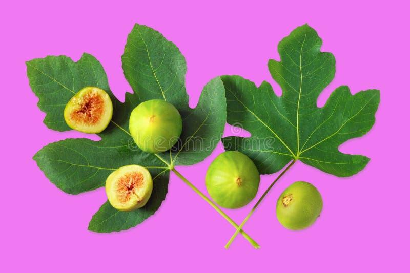 Frutti del fico e foglie verdi maturi del fico sul fondo di violetti rossastri Disposizione piana immagini stock