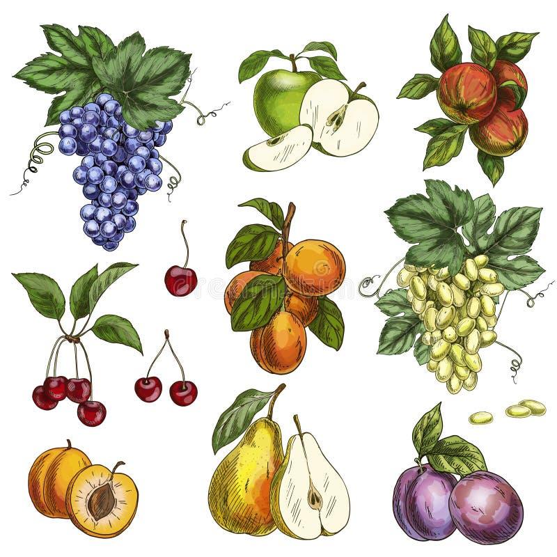 Frutti del giardino con le foglie ed i rami Ciliegia, mele, pera, prugne, albicocche, uva royalty illustrazione gratis