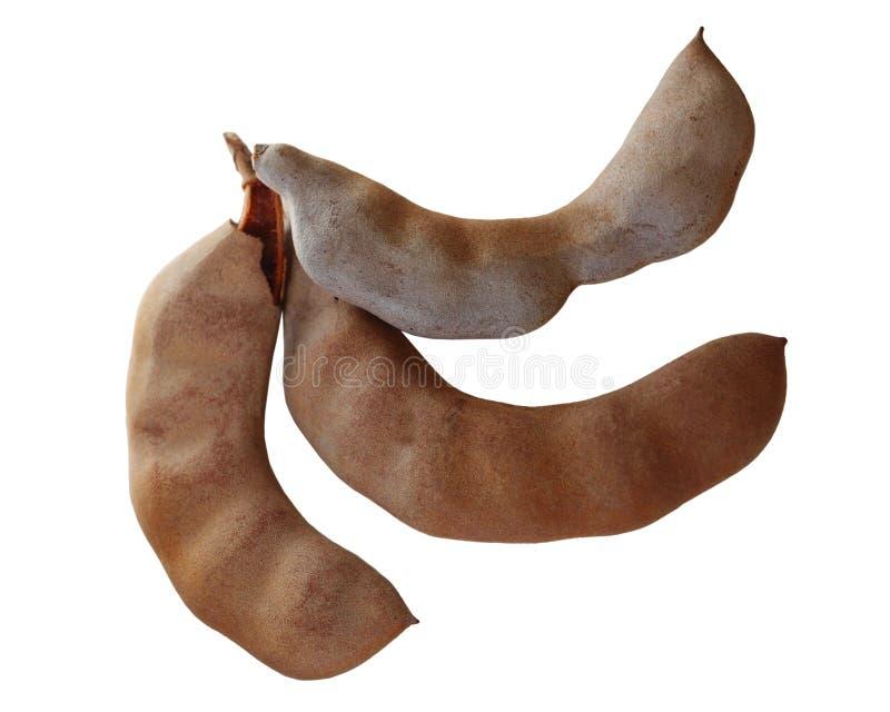Download Frutti del tamarindo fotografia stock. Immagine di botanica - 117980502
