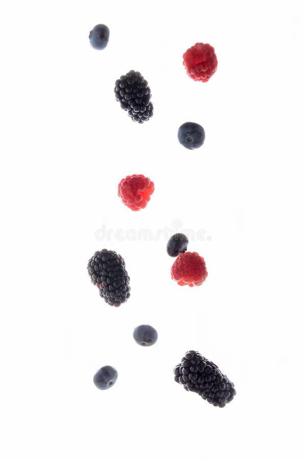Frutti della mora, del lampone e del mirtillo di volo isolati su fondo bianco fotografia stock
