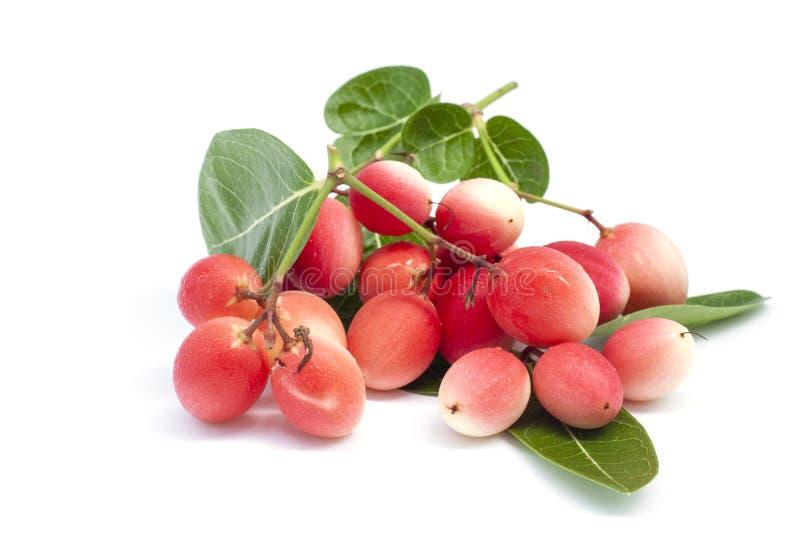 Frutti della spina di Karanda, di Carunda o di Cristo con la foglia isolata su fondo bianco fotografie stock