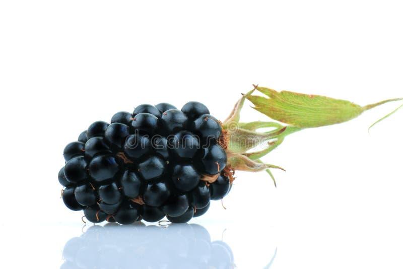 Frutti di Blackberry fotografie stock libere da diritti
