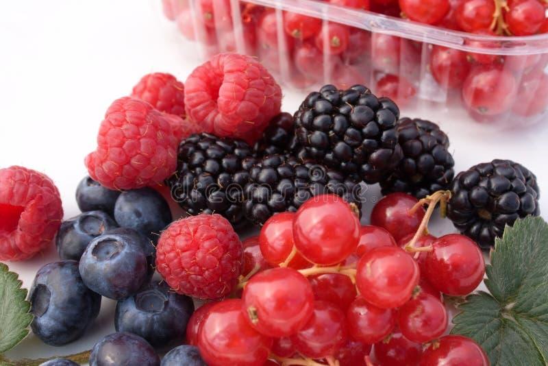 Frutti Di Bosco - Closeup