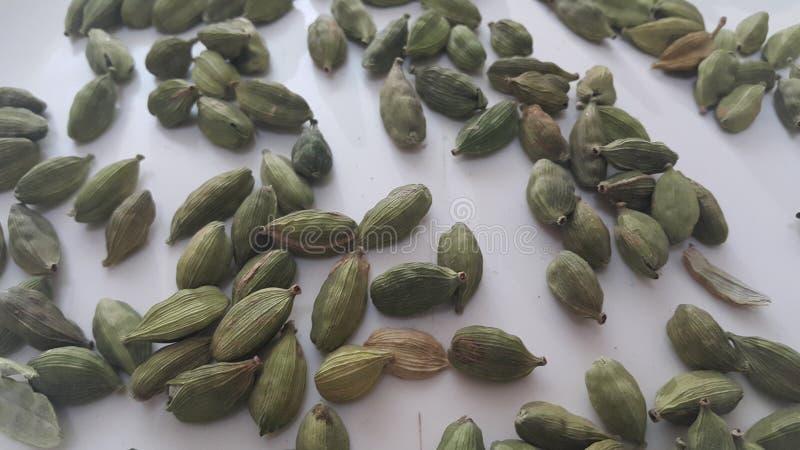 Frutti di elettaria cardamomum con i semi, spezia del cardamomo illustrazione vettoriale