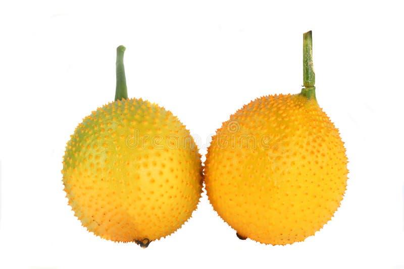 Frutti di Gac fotografia stock libera da diritti
