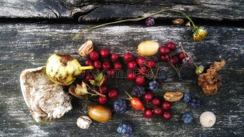 Frutti di legno su un banco immagini stock libere da diritti