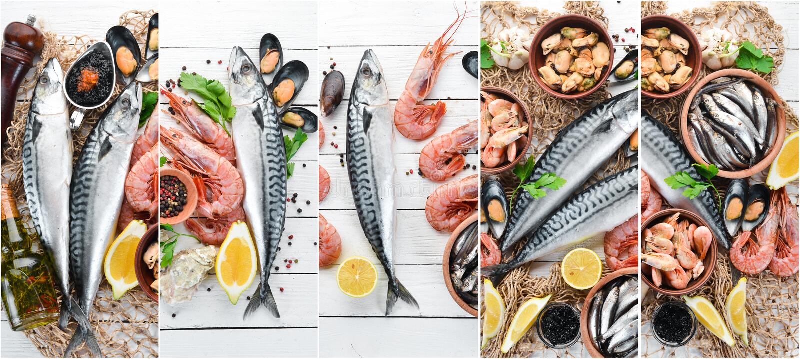 Frutti di mare del collage della foto immagine stock