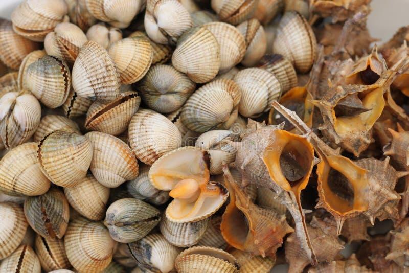 Frutti di mare: lumache di mare e cuori edule freschi immagini stock