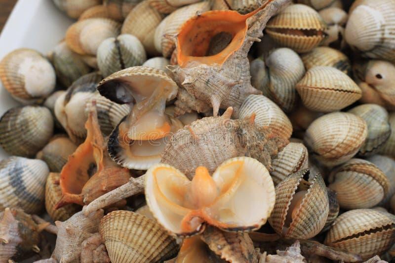 Frutti di mare: lumache di mare e cuori edule freschi fotografia stock libera da diritti