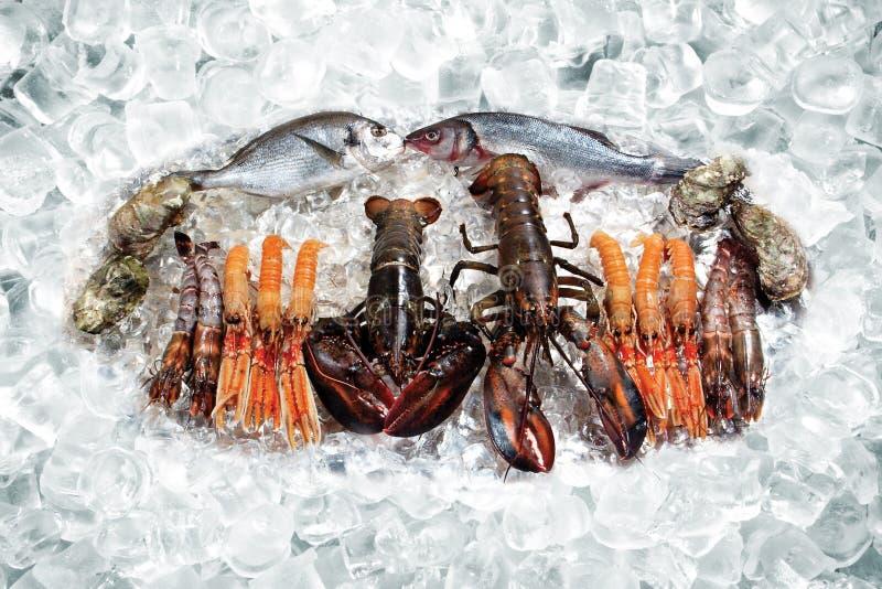 Frutti di mare su ghiaccio fotografia stock libera da diritti