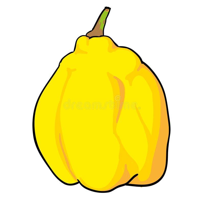 Frutti disegnati a mano della cotogna isolati immagini stock
