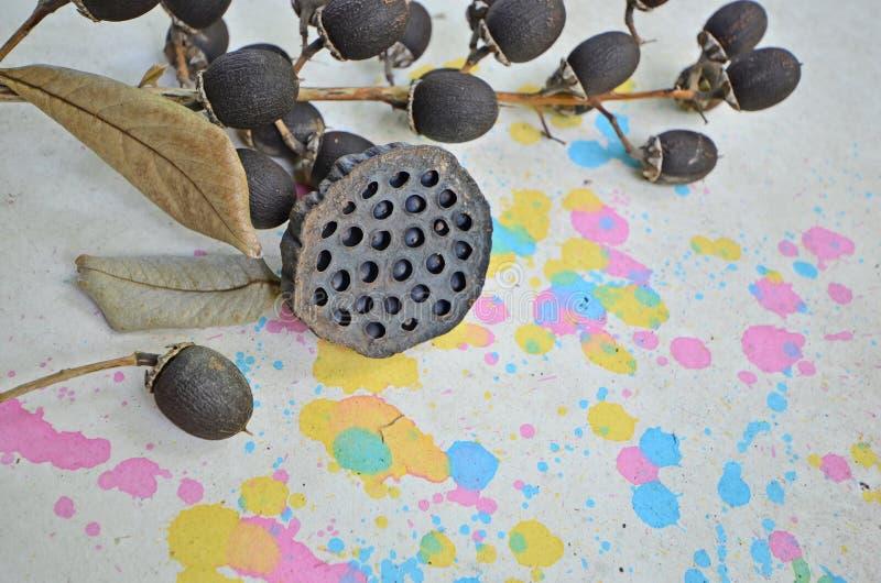 Frutti e foglie secchi sul pavimento colorato immagini stock libere da diritti