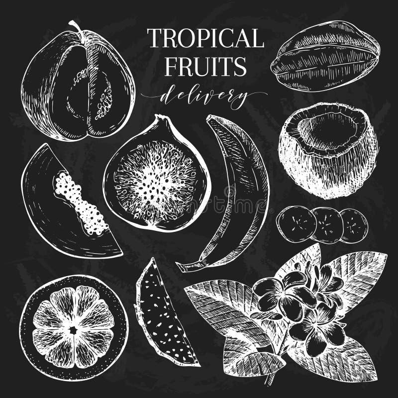 Frutti esotici disegnati a mano di vettore Ingredienti della ciotola del frullato incisi stile della lavagna Consegna dolce tropi royalty illustrazione gratis