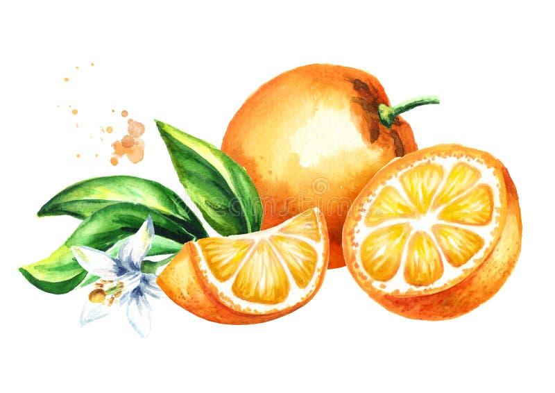 Frutti, foglie e composizione arancio freschi nel fiore Illustrazione disegnata a mano dell'acquerello, isolata su fondo bianco illustrazione di stock