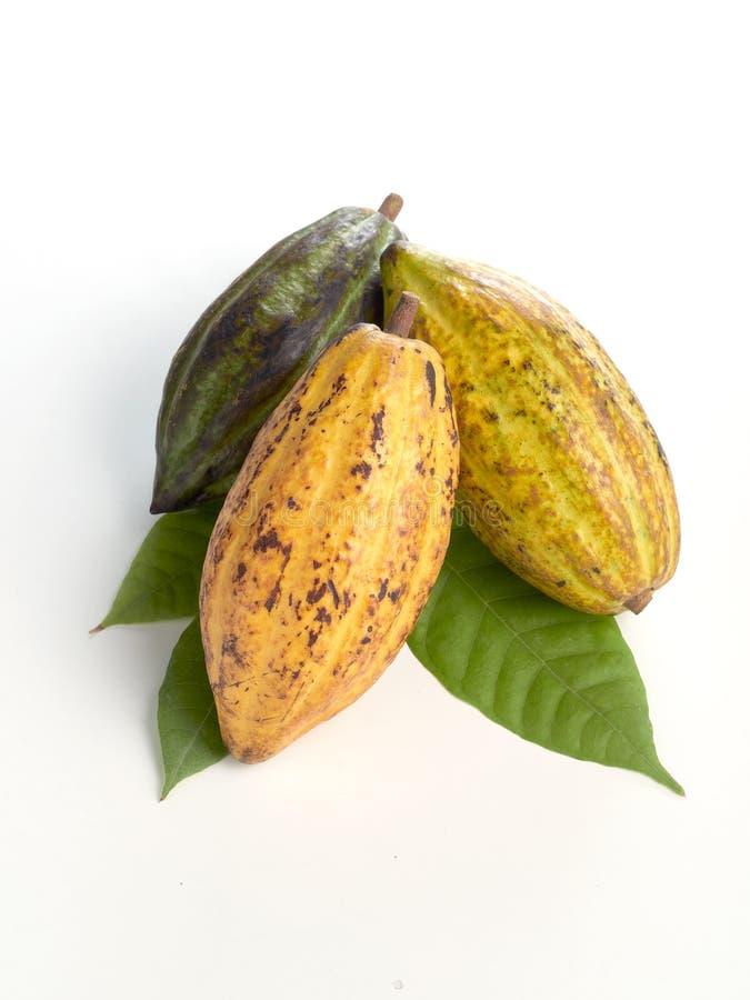 Frutti freschi del cacao con la foglia verde fotografie stock libere da diritti