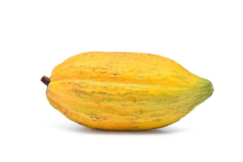 Frutti freschi del cacao isolati su bianco immagine stock libera da diritti