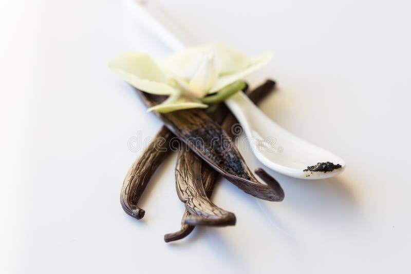 Frutti secchi della vaniglia e fiore della vaniglia dell'orchidea isolato su fondo bianco Percorso di ritaglio fotografie stock libere da diritti