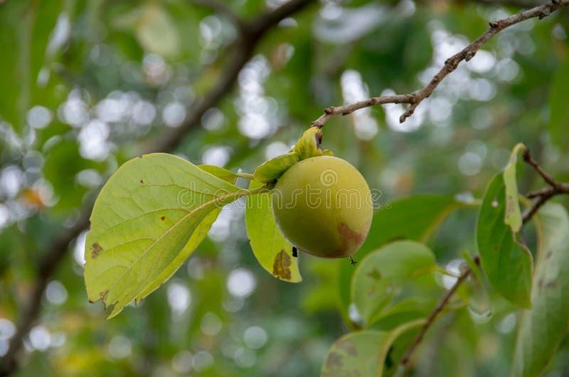 frutti sviluppati nel Vietnam immagine stock libera da diritti