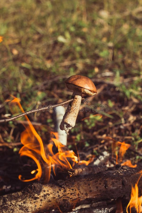 Fry mushroom. At the stake in a hike in the woods royalty free stock photography