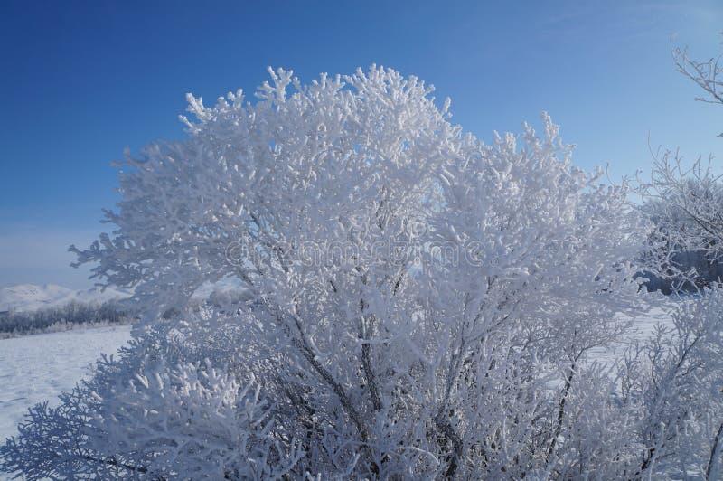 frysa för dag arkivfoto