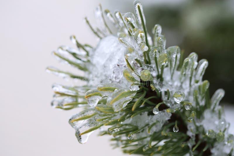 frysa regn fotografering för bildbyråer