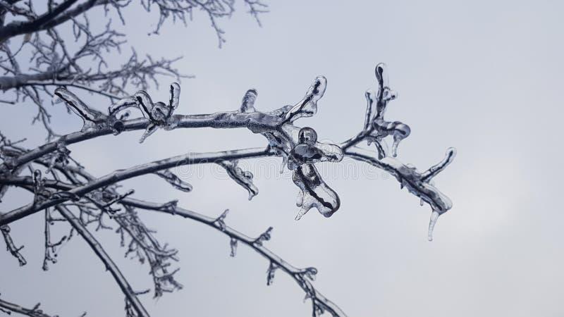 Frysa regn på visningen nummer fem för trädfilial royaltyfria bilder