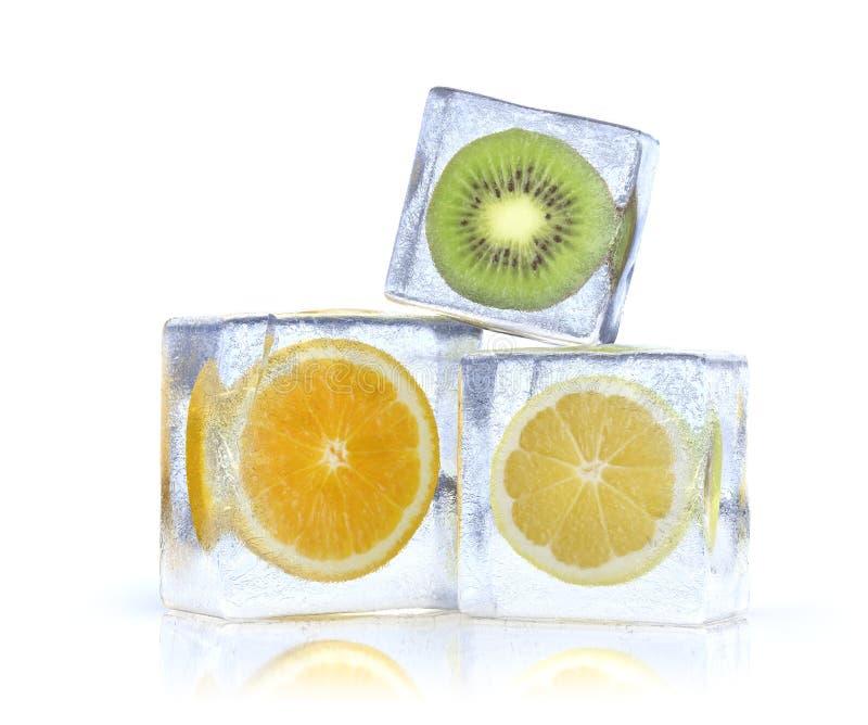 fryst citrus vektor illustrationer