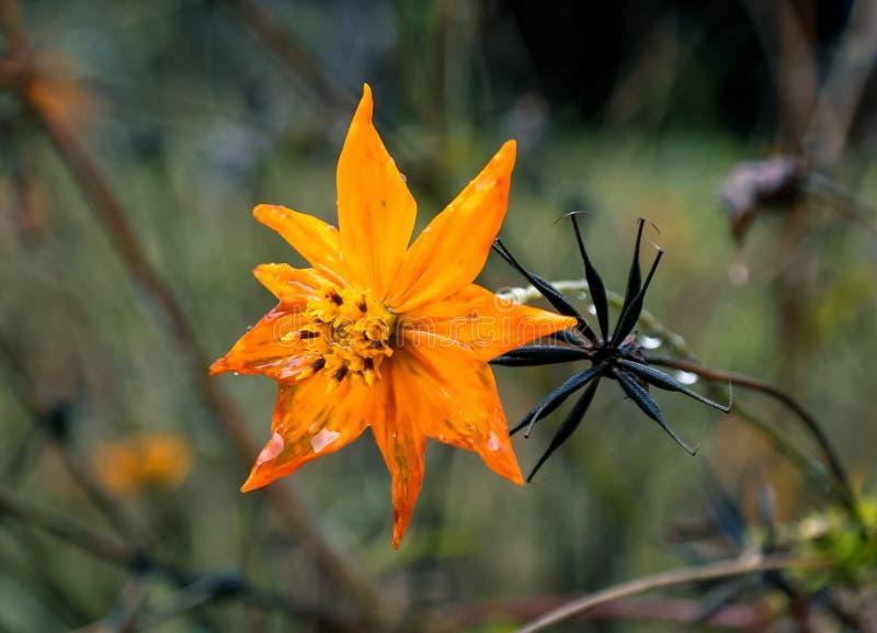 Fryst närliggande Luphara för blomma flod, Abkhasia royaltyfria foton
