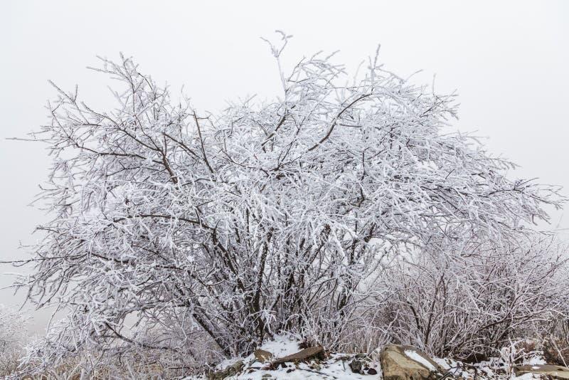 Fryst vinterlandskap i sichuan, Kina arkivfoto