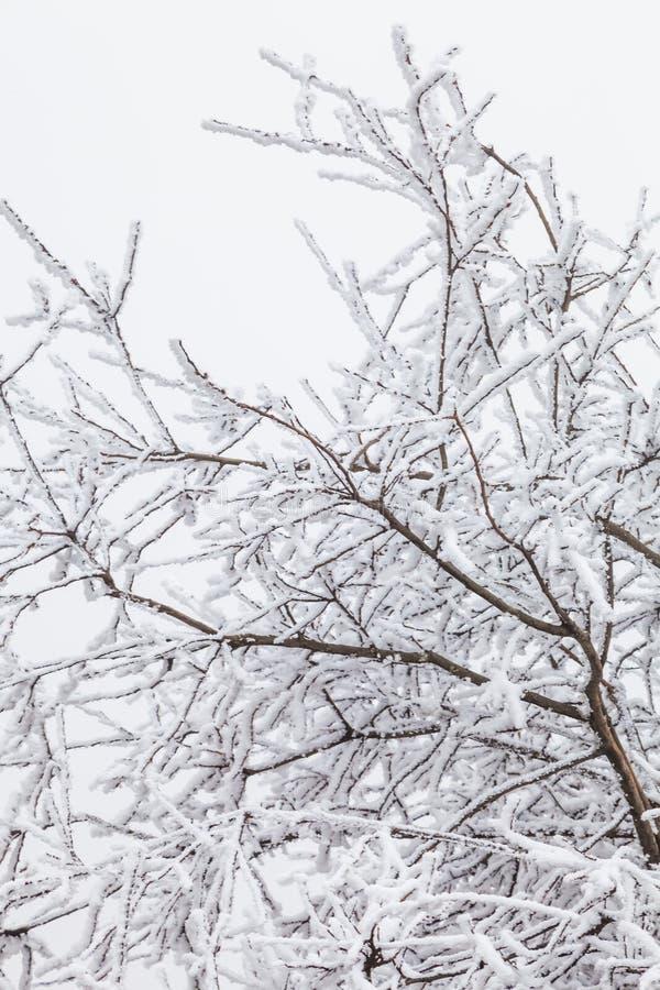 Fryst vinterlandskap i sichuan, Kina royaltyfri bild