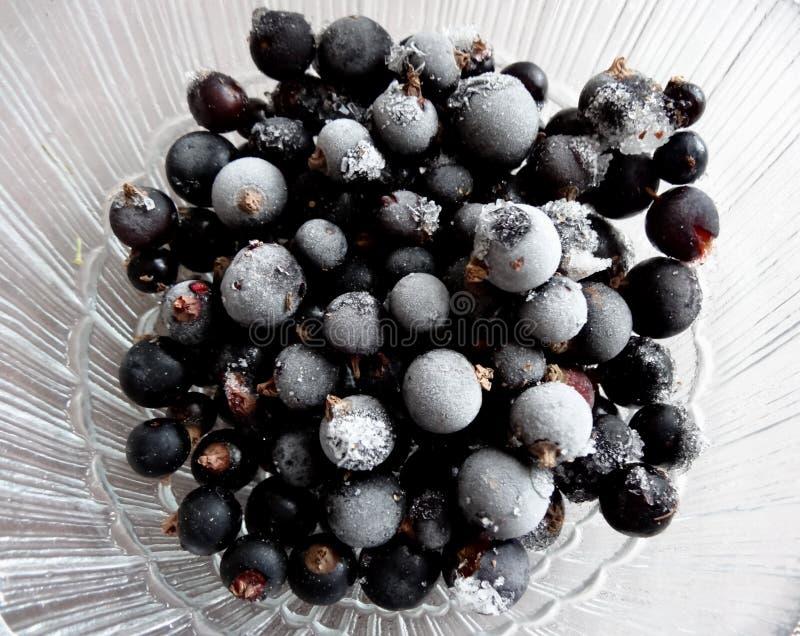 Fryste melts för svart vinbär arkivbild